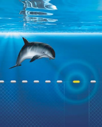 How is sound used to protect marine mammals      Discovery