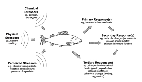 physiological stress discovery of sound in the sea