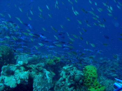 Photo of a coral reef.