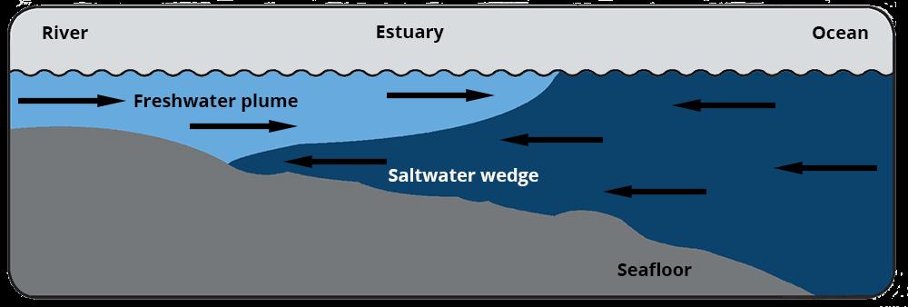 illustration of a salt wedge estuary